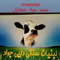 محمدجواد شعبانیان
