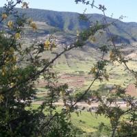 زعفران تیموری