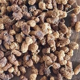 توت خشک درجه 2 امسالی، 5 کیلویی محصول باغات آذربایجان
