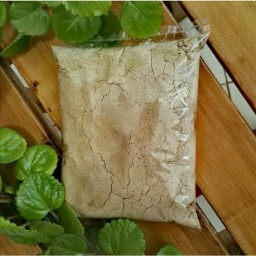 قوتو چهل گیاه محصول کرمان