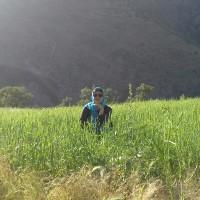 نرگس سپهری/مشکات
