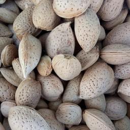 بادام تلخ (حداقل سفارش 10 کیلو)