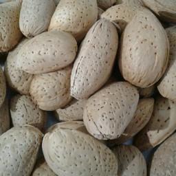 بادام سنگی یک کیلو