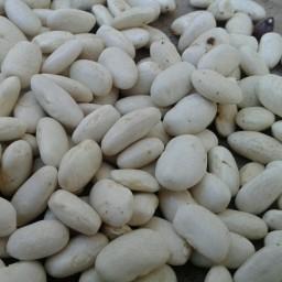 لوبیا سفید 1 کیلو