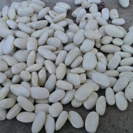 لوبیا سفید 1 کیلو- باسلام