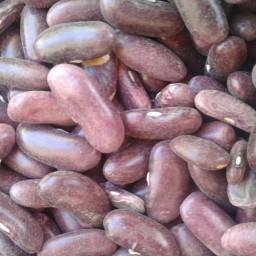 لوبیا کشاورزی یا کپسولی