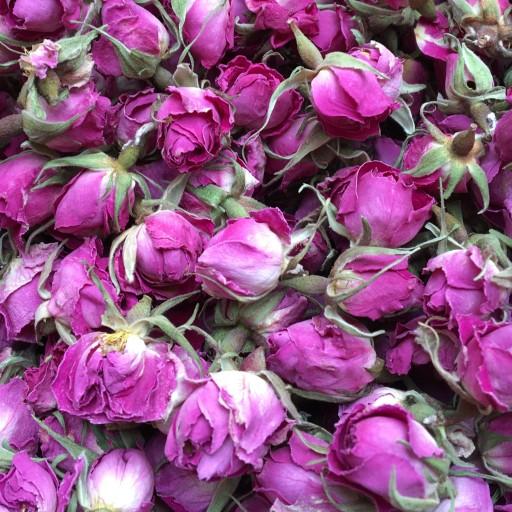 غنچه گل محمدی- باسلام