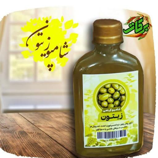 شامپو زیتون- باسلام