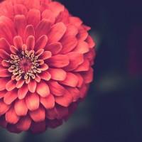 محمد میرشکار