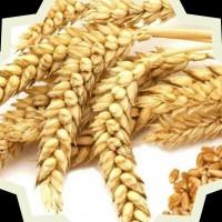 محمدصادق میرحسینی