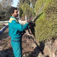 مجید علیجانی