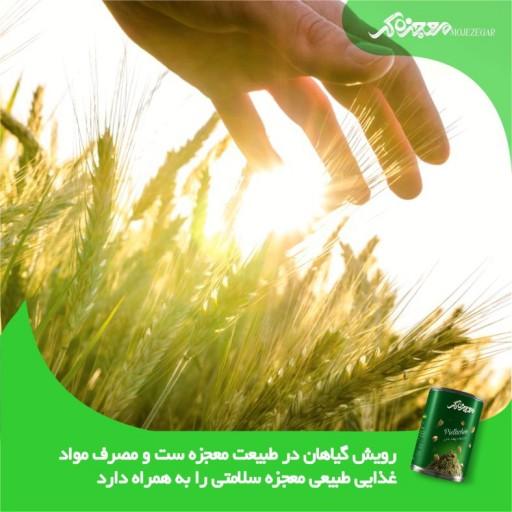 قاووت « قوتو» چهل گیاه یا مخلوط«170» گرمی- باسلام