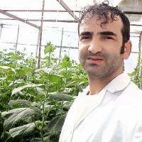 Mohammad hatamikia