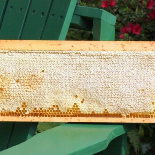 عسل طبیعی آویشن موم دار- باسلام