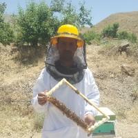 سید جواد شریفی