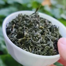 چای سبز قلم از باغات املش گیلان