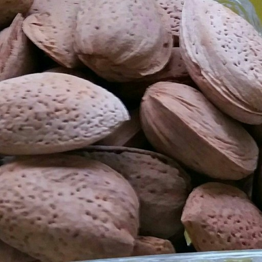 بادام سنگی ارگانیک سایز درشت- باسلام