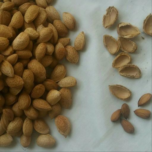بادام پوست نازک ارگانیک  1کیلو گرمی- باسلام