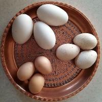 غرفه ی بارفروش / رمضان نیا