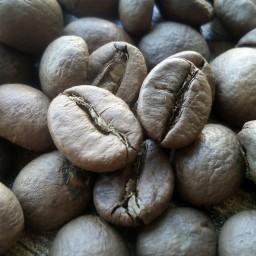 قهوه چری روبوستا دون و آسیاب250 گرم