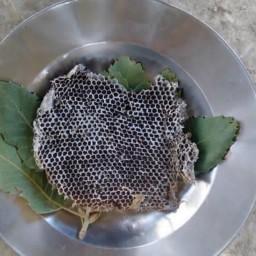 عسل باموم طبیعی(عسل فروشی مادر )