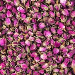 گل محمدی پر و غنچه امسالی