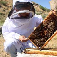 امید عباس زاده