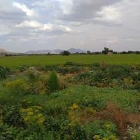 علی کاربلد