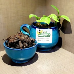 گیاه سنبل الطیب ممتاز فدک (20گرم)