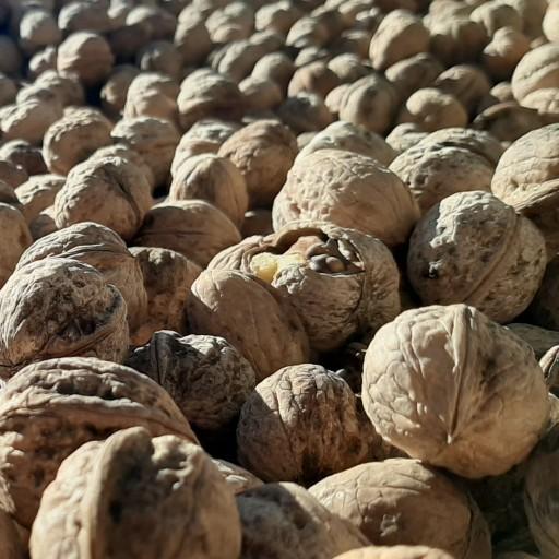 گردوی تازه و امسالی لشکری (850 گرمی)- باسلام