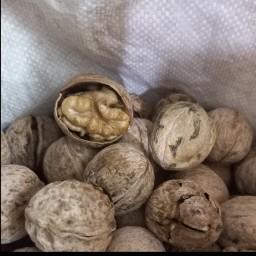 گردو پوست کاغذی اعلاء سفید و چرب محصول ایرانی(900گرم خالص)